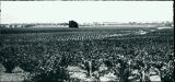 1900 Vineyards