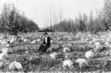 1900 Woman sitting in pumpkin patch.