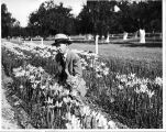 Man kneeling between rows of flowers.