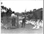 Two men holding chickens in a chicken pen.