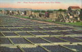 Fruit drying in California