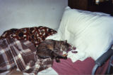Picture of Patricia Whiting's pet cat on bed