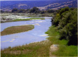 Salinas Riverbank near Chualar