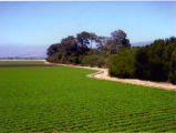 Salinas Valley Fields
