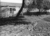 Bunkhouse, Gonzales area (Salinas Valley)